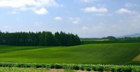 الصين تعتزم استئجار 5% من أراضي أوكرانيا لزراعتها