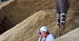 أوكرانيا تحذر من ارتفاع أسعار القمح بسبب البرد الذي أتلف ثلث محصولها