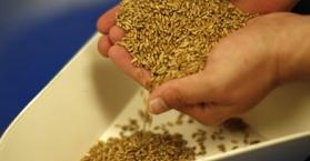بعد التأكد من توفر معايير الجودة.. مصر تستلم 61 طنا من القمح الأوكراني