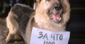 احتجاج في أوكرانيا ضد قتل الكلاب الضالة استعدادا لبطولة اليورو 2012