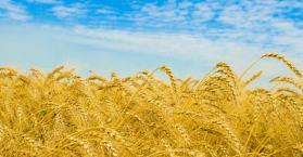 حجم صادرات أوكرانيا الزراعية يبلغ 17 مليار دولار خلال العام 2012