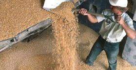 أوكرانيا تزود سوريا بنحو 100 ألف طن من القمح الطري