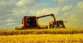 """مذكرة تفاهم """"عالقة"""" لتصدير 600 ألف طن من القمح الأوكراني إلى سوريا"""