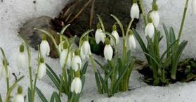 الطقس الدافئ المستقر لن يحل على أوكرانيا قبل شهر مايو المقبل