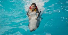 السباحة مع الدلافين.. طريقة مبتكرة للعلاج في أوكرانيا