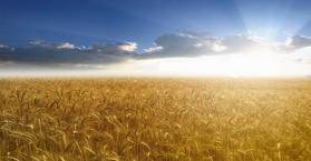 رغم الأزمة التي تعيشها.. صادرات أوكرانيا من القمح تبلغ مستويات قياسية