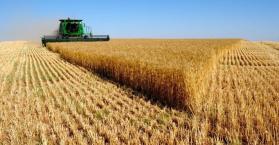 أوكرانيا تنافس الولايات المتحدة  في تصدير القمح إلى مصر